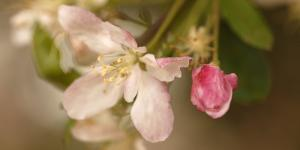 Spring in Magoebaskloof